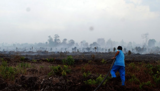 Govt Allocates Rp865 Billion for Peatland Restoration